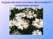 Будова квіткової рослини. Вегетативні й генеративні органи