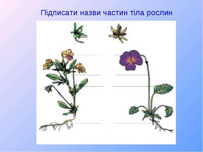 Підписати назви частин тіла рослин