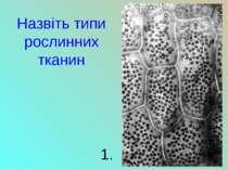 Назвіть типи рослинних тканин 1.