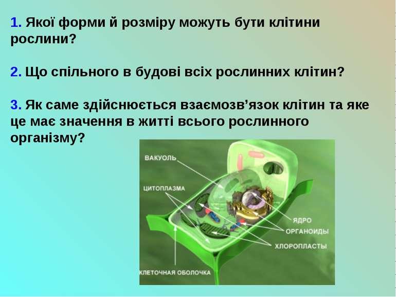 1. Якої форми й розміру можуть бути клітини рослини? 2. Що спільного в будові...