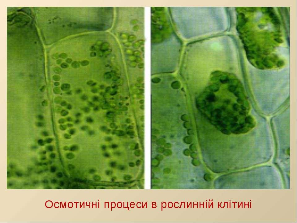 Осмотичні процеси в рослинній клітині
