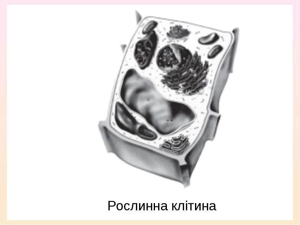 Рослинна клітина
