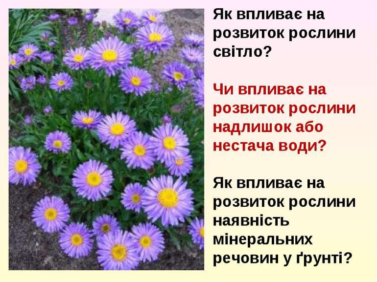 Як впливає на розвиток рослини світло? Чи впливає на розвиток рослини надлишо...