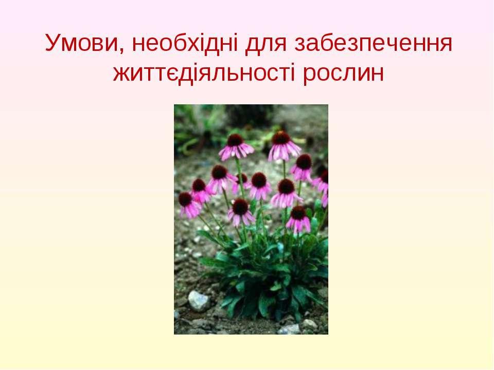 Умови, необхідні для забезпечення життєдіяльності рослин