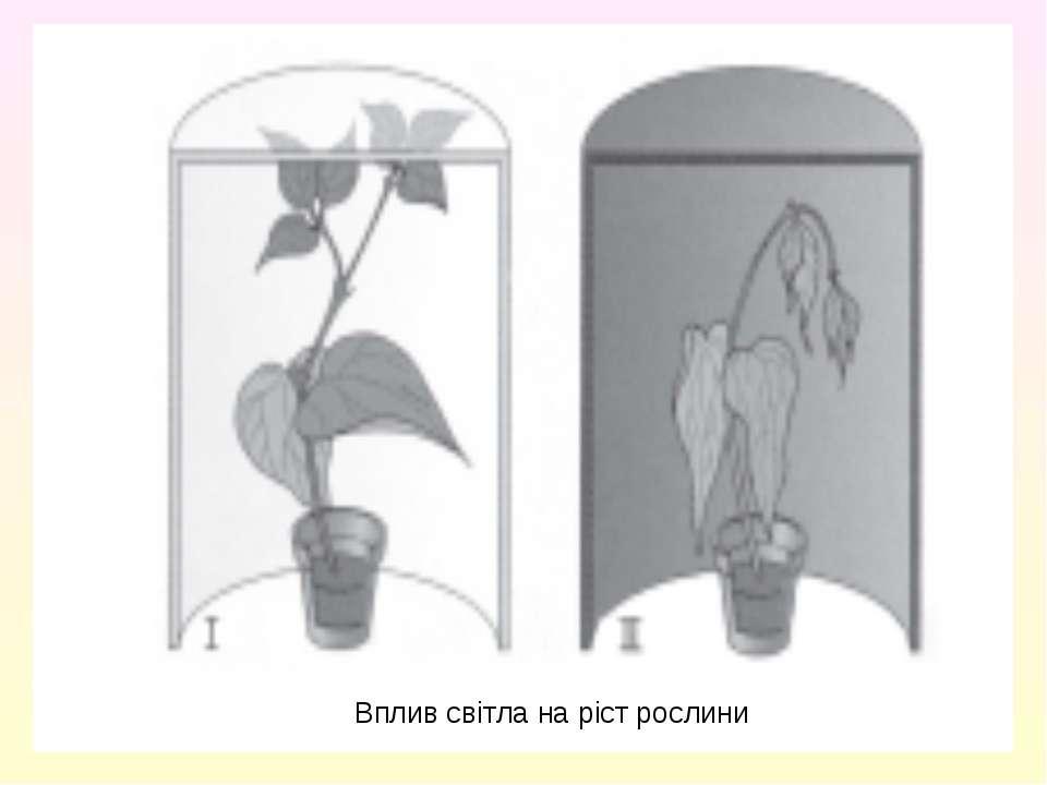 Вплив світла на ріст рослини