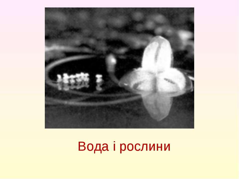 Вода і рослини