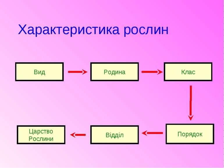 Характеристика рослин Вид Родина Клас Порядок Відділ Царство Рослини
