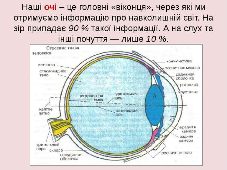 Наші очі – це головні «віконця», через які ми отримуємо інформацію про навкол...