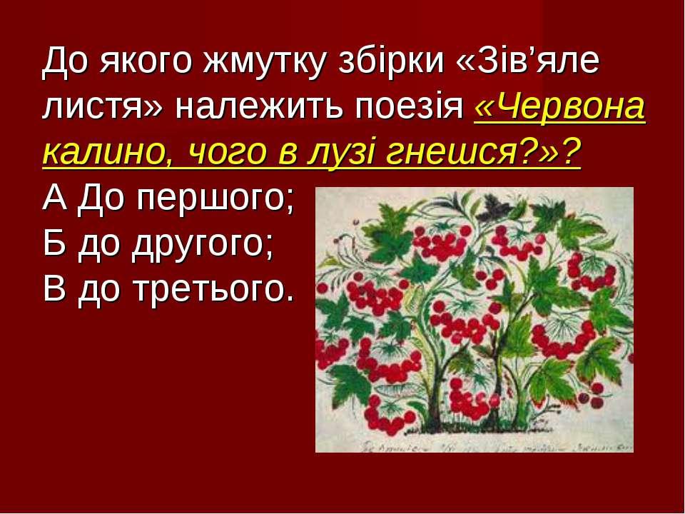 До якого жмутку збірки «Зів'яле листя» належить поезія «Червона калино, чого ...