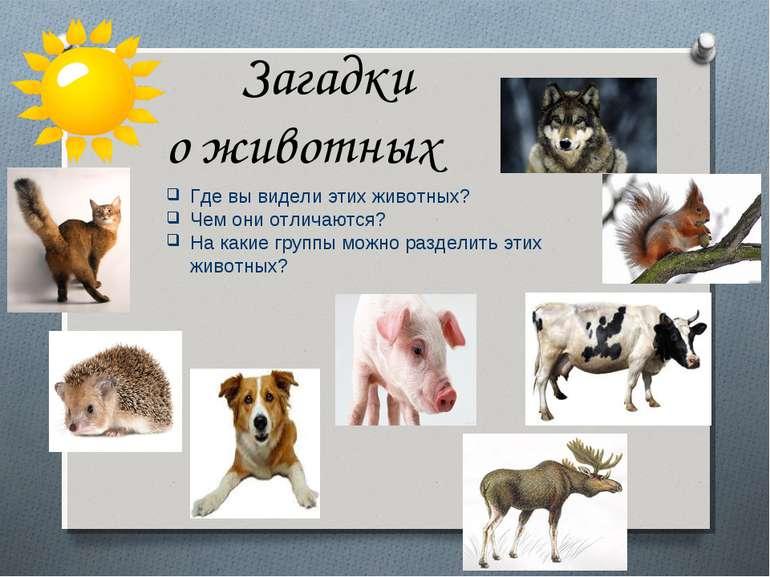 Где вы видели этих животных? Чем они отличаются? На какие группы можно раздел...