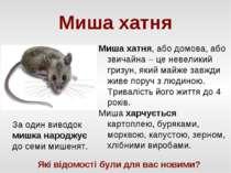 Миша хатня Миша хатня, або домова, або звичайна – це невеликий гризун, який м...