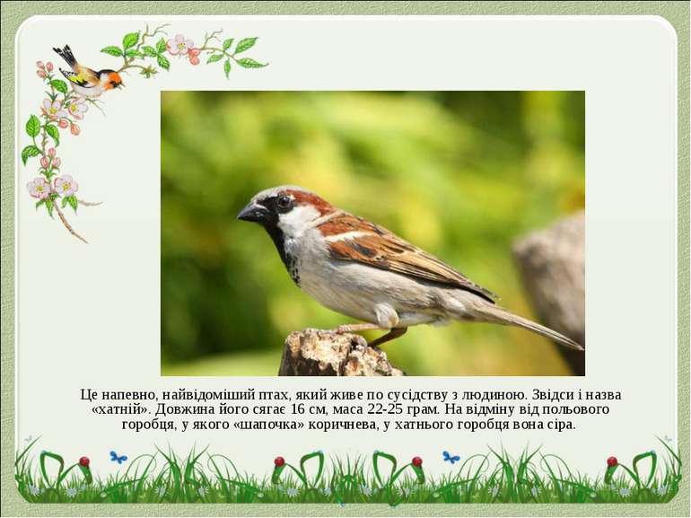 Це напевно, найвідоміший птах, який живе по сусідству з людиною. Звідси і наз...