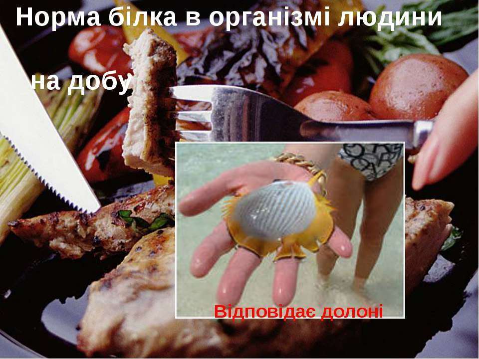 Норма білка в організмі людини на добу Відповідає долоні