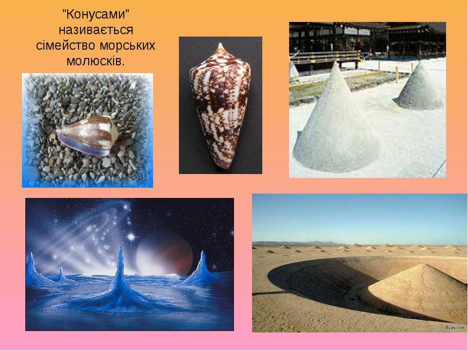 """""""Конусами"""" називається сімейство морських молюсків."""
