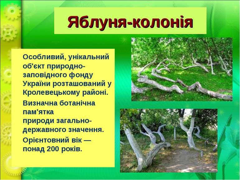 Яблуня-колонія Особливий, унікальний об'єкт природно-заповідного фонду Україн...