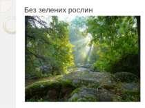 Без зелених рослин