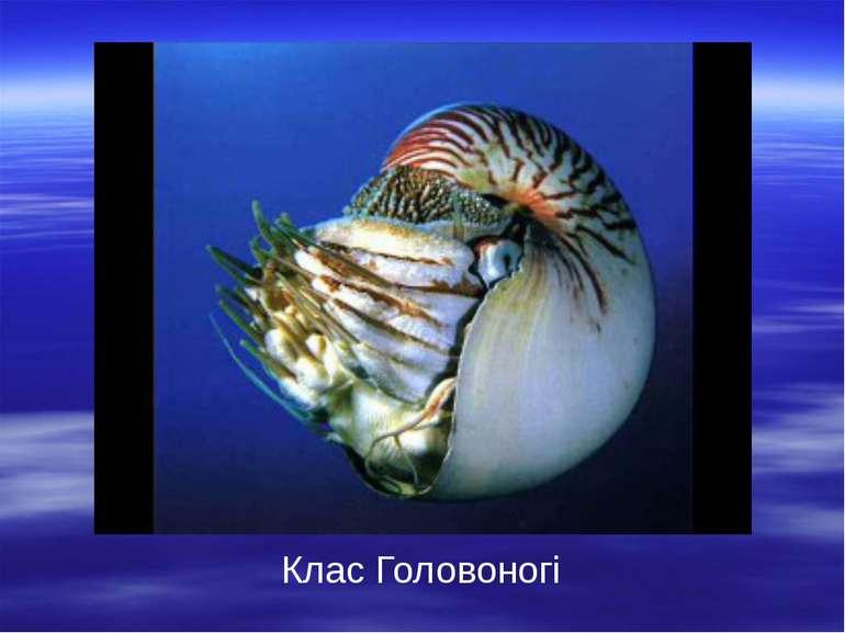 Біоніка – наука, яка вивчає будову живих організмів з метою використання їхні...