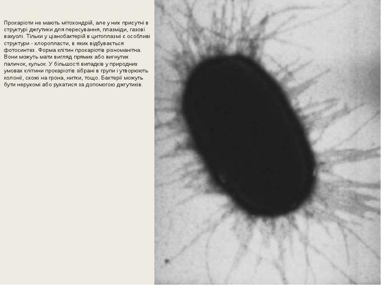 Прокаріоти не мають мітохондрій, але у них присутні в структурі джгутики для ...