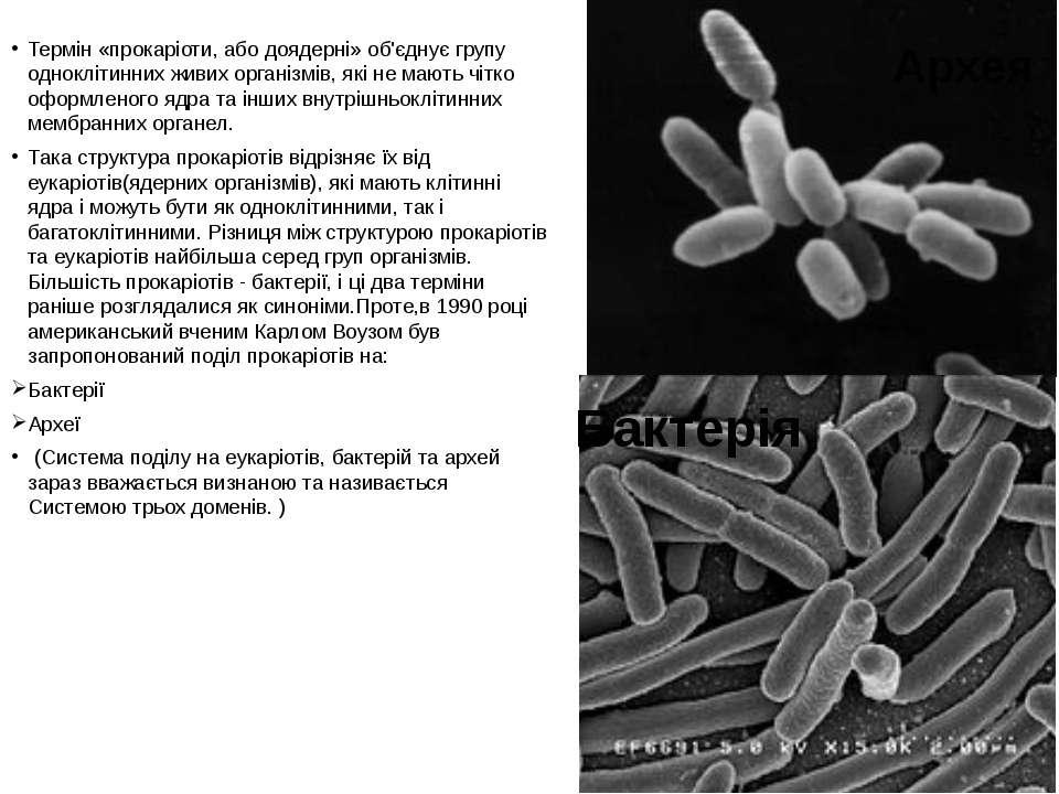 Термін «прокаріоти, або доядерні» об'єднує групу одноклітинних живих організм...