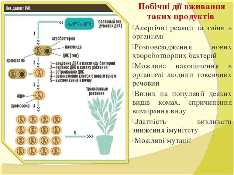 Побічні дії вживання таких продуктів Алергічні реакції та зміни в організмі Р...