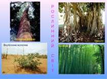 Р О С Л И Н Н И Й С В І Т Атласне дерево Верблюжа колючка Баньян Бамбук