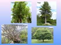 Гвоздичне дерево Суничне дерево Кедр Граб