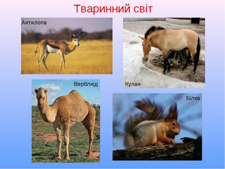 Тваринний світ Антилопа Кулан Верблюд Білка