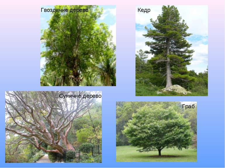 растения евразии фото с названиями очень быстро
