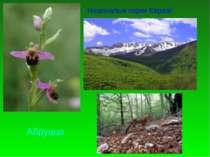Національні парки Євразії Абруццо