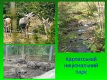 Карпатський національний парк