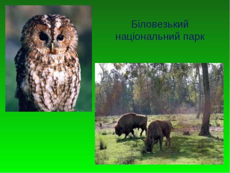 Біловезький національний парк