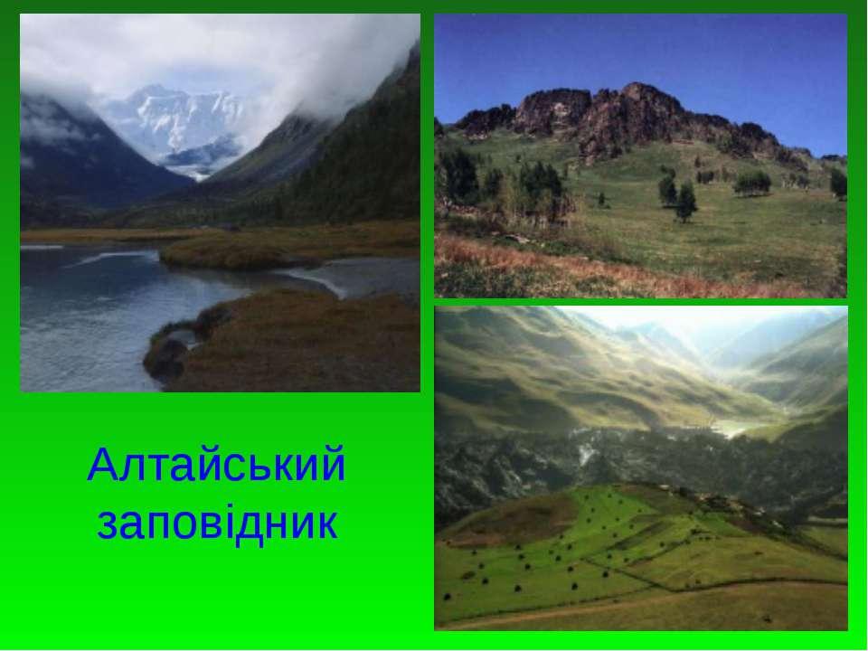 Алтайський заповідник