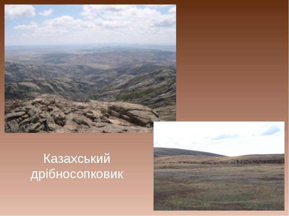 Казахський дрібносопковик
