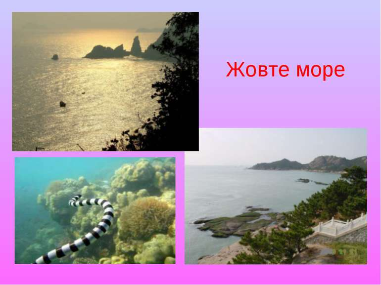 Жовте море