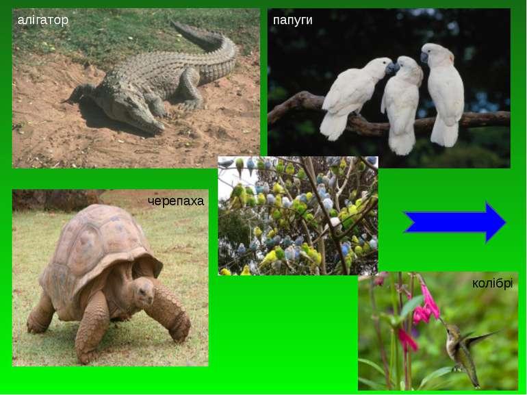 алігатор папуги черепаха колібрі