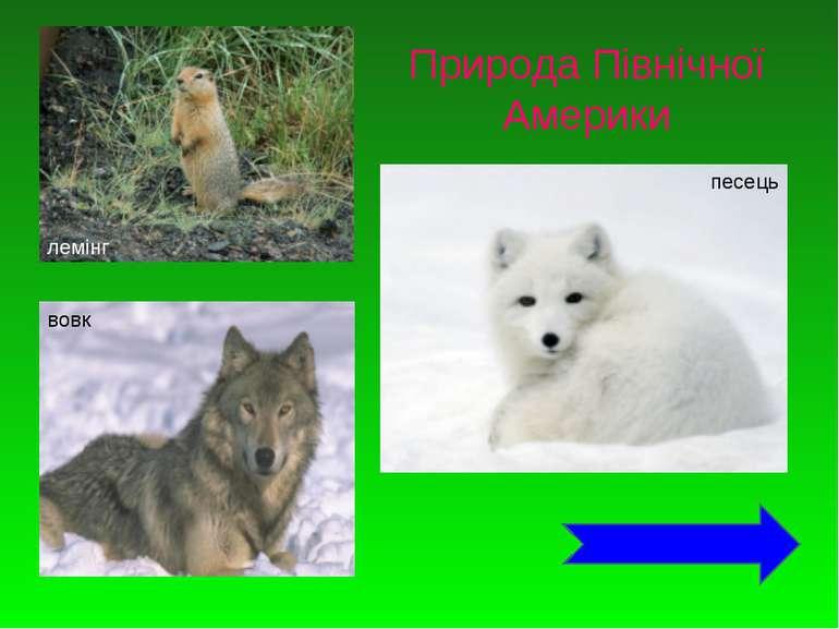 лемінг вовк песець Природа Північної Америки