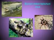 Вологі екваторіальні ліси Алігатор Анаконда Павук-птахоїд