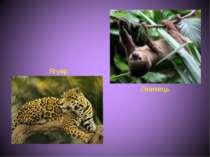 Лінивець Ягуар
