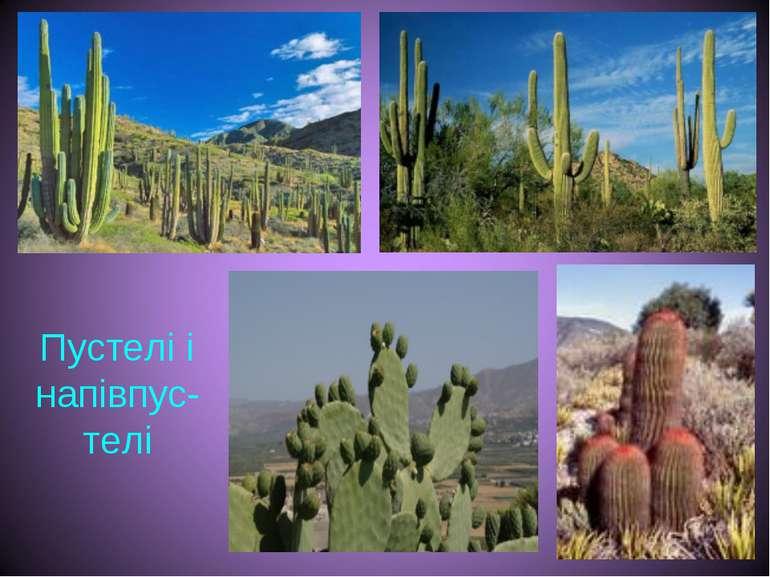 Пустелі і напівпус-телі
