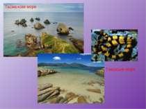 Тасманове море Тіморське море
