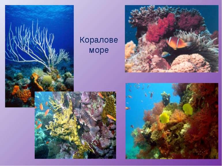 Коралове море