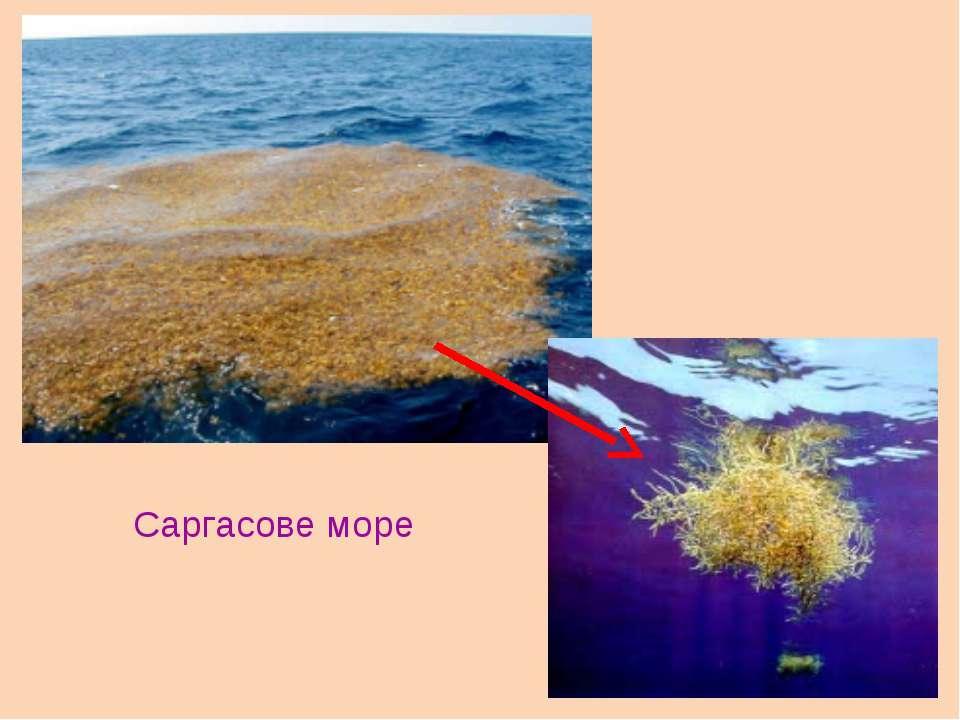 Саргасове море