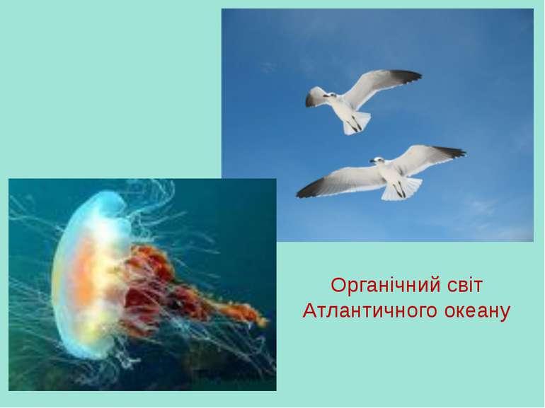 Органічний світ Атлантичного океану