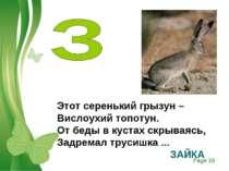 Этот серенький грызун – Вислоухий топотун. От беды в кустах скрываясь, Задрем...