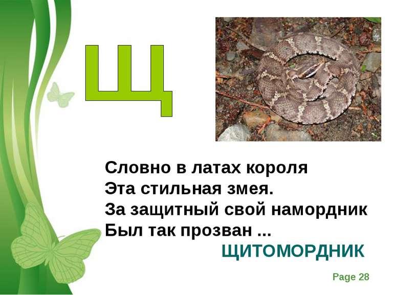 Словно в латах короля Эта стильная змея. За защитный свой намордник Был так п...