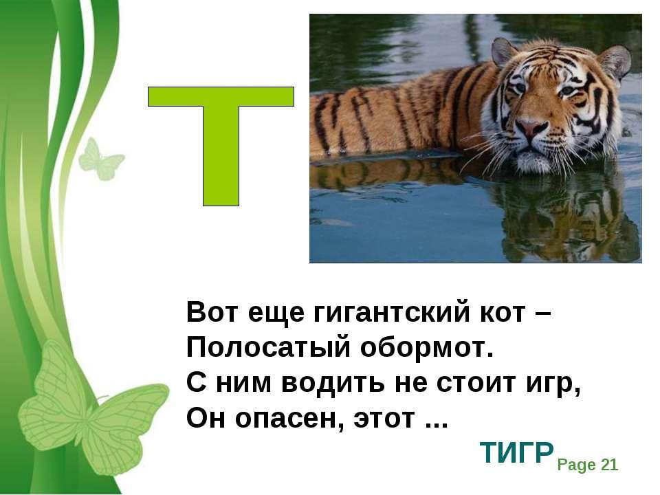 амурский тигр стихи выпавшие