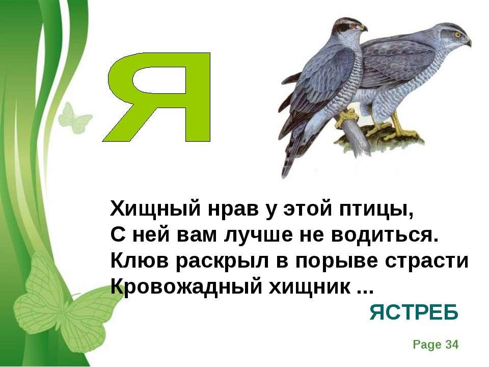 Хищный нрав у этой птицы, С ней вам лучше не водиться. Клюв раскрыл в порыве ...