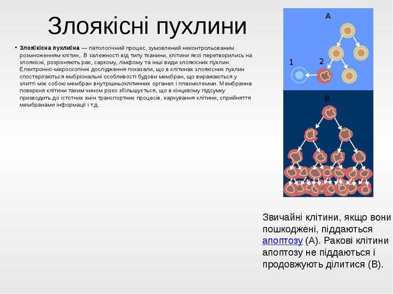 Злоякісні пухлини Злоя кісна пухли на—патологічнийпроцес, зумовлений некон...