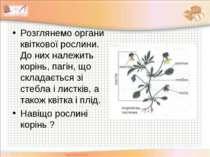 Розглянемо органи квіткової рослини. До них належить корінь, пагін, що склада...