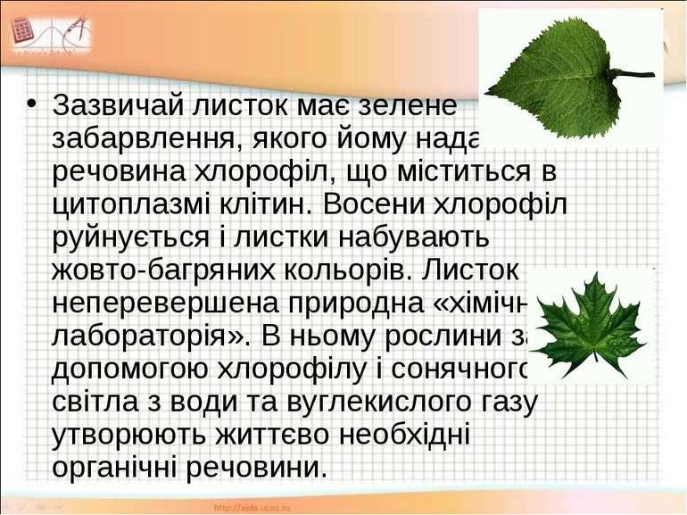 Зазвичай листок має зелене забарвлення, якого йому надає речовина хлорофіл, щ...
